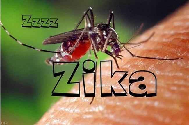 Virut zika gây bệnh từ muỗi
